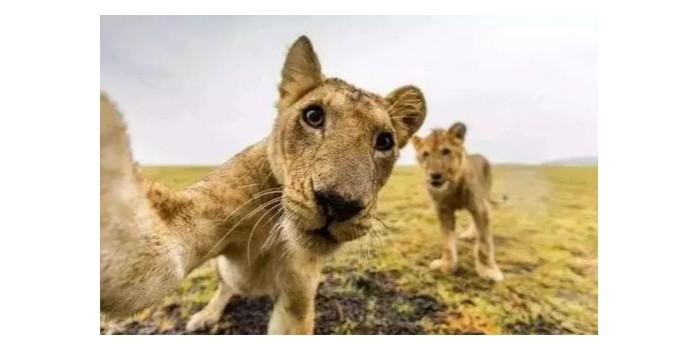 国际珍稀动物保护日,莫等珍稀才懂珍惜-【蓝图uv机】